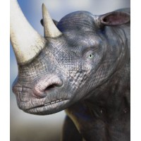 Ray Noserus: Rhino Man